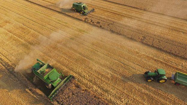 Campo agrícola.