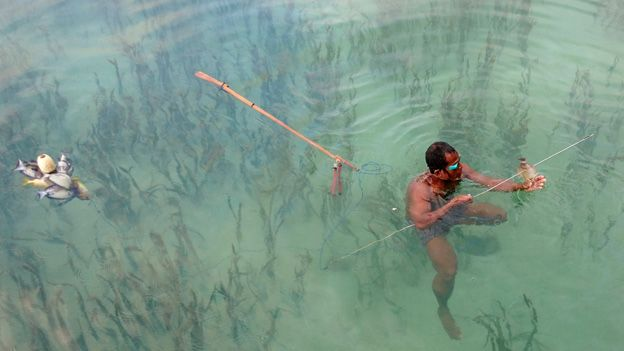 Indigenous fisher spearfishing in seagrass in Indonesia