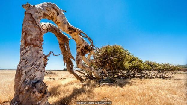 Tây Úc giữ kỷ lục về cơn gió mạnh nhất từng được ghi nhận, và những cơn gió mạnh của nó đã định hình nên phong cảnh của đất nước này.