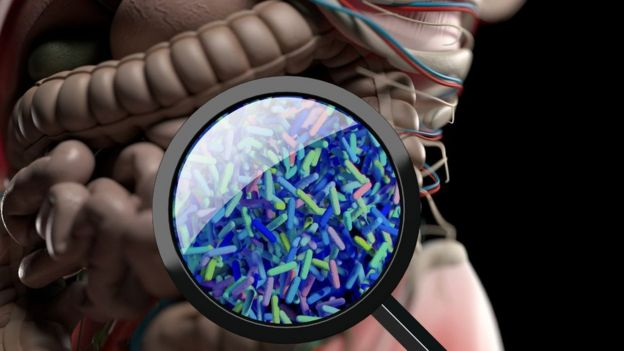 Intestinal microbes