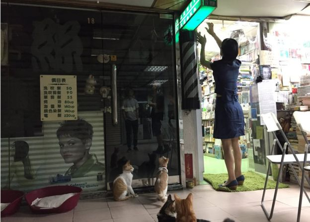 深夜陳琁開始整理書店、餵貓。