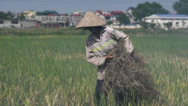 Nông nghiệp Việt Nam hy vọng hưởng lợi nhờ hiệp định thương mại với EU