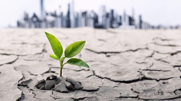 solo seco com uma planta