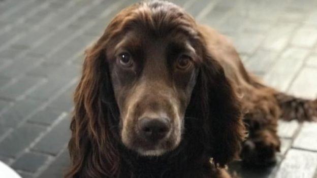 A three-year-old cocker spaniel was stolen