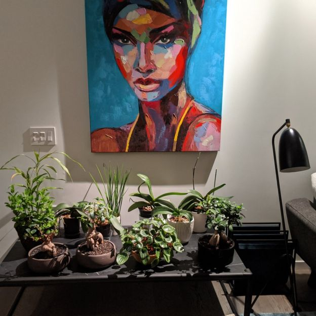 Leena brought the office plants home to try to bring them back to life.