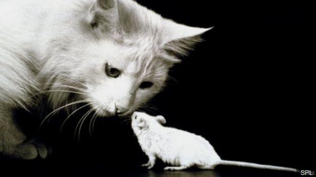 แมวและหนูมีวิวัฒนาการที่สัมพันธ์กันมาเป็นเวลานานหลายพันปี