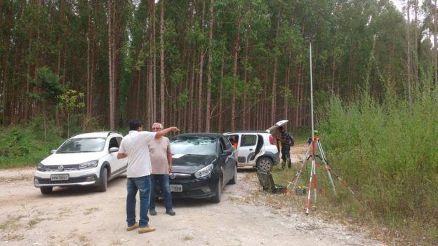 peritos em área de plantção de eucalipto