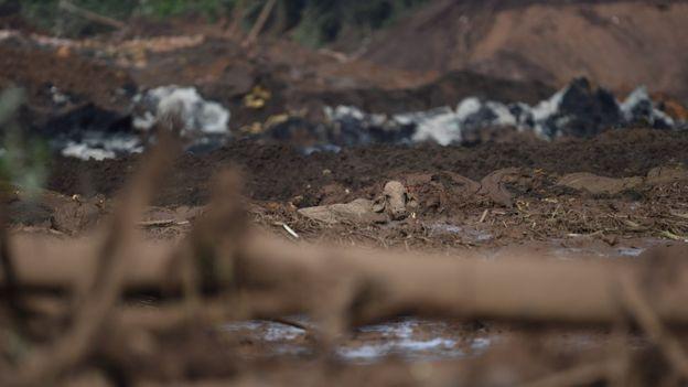 Uma vaca em meio à lama após rompimento de barragem em Brumadinho