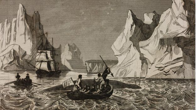 Illustration of whale hunting in the 1840s
