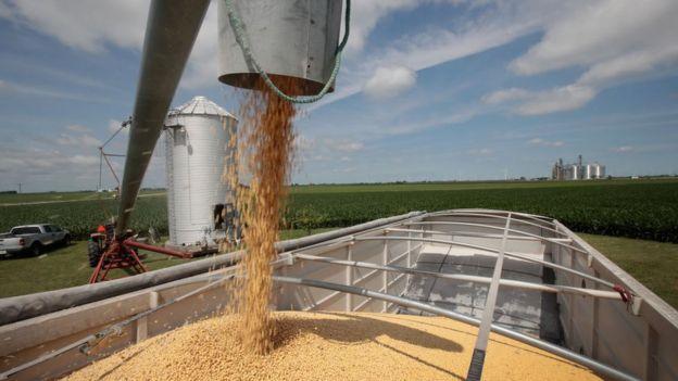 伊利諾伊州的大豆農場