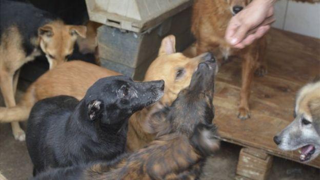 Há casos de animais de estimação cujo dono entrou na extensa lista de vítimas da covid-19