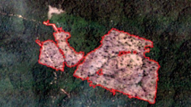 Imagem de satélite da mesma área da floresta, mas desmatada