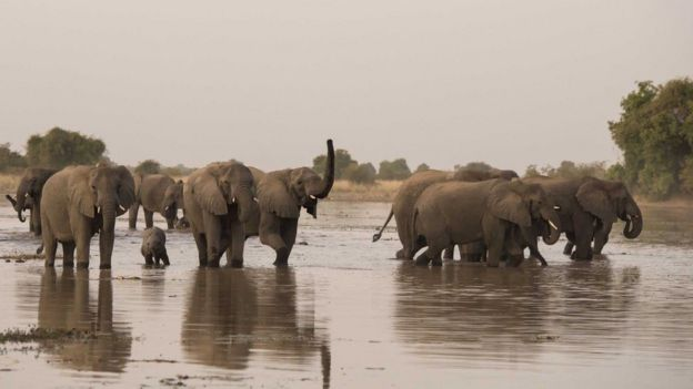 Sanadkii tegay ee 2018-kii, 87 Maroodi ayaa lagu laayay kayn ku taala dalka Botswana