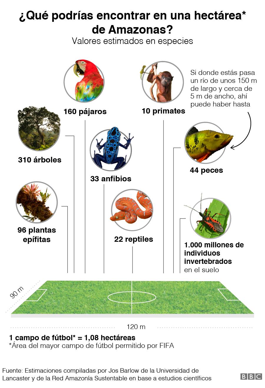 ¿Qué podrías encontrar en una hectárea de Amazonía?