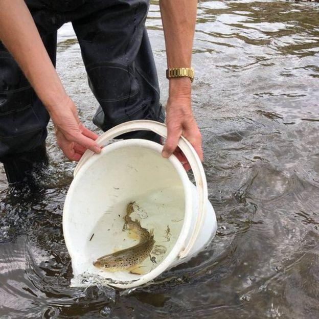 Peixe resgatado por ambientalista