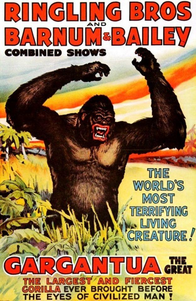 Cartaz de gorila do circo
