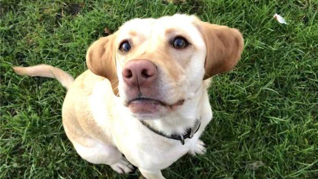 the book of barkley love and life through the eyes of a labrador retriever