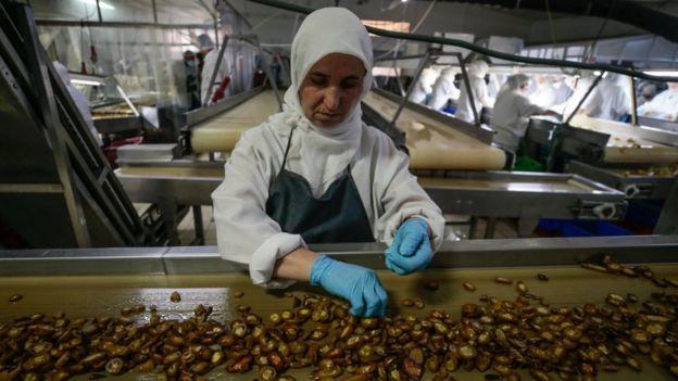 турция, завод по обработке перца
