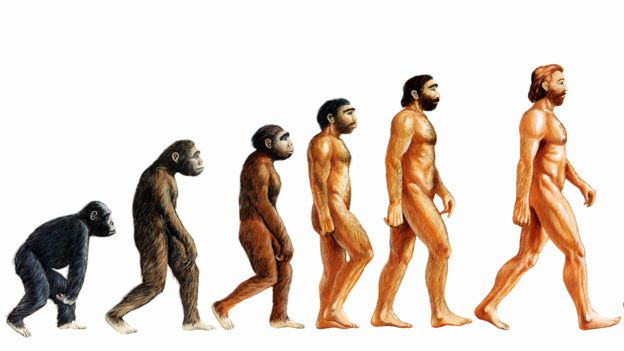 Ilustración de la evolución humana