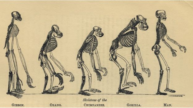 İnsan ve en yakın akrabalarının iskeletleri