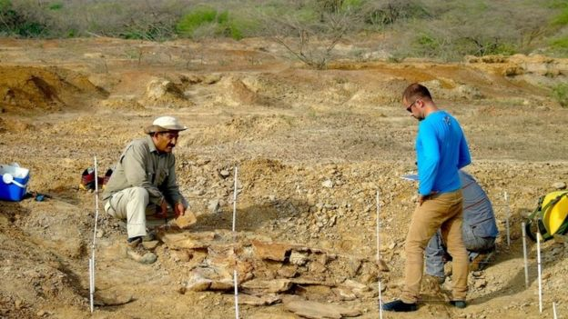 Colombian and Venezuelan paleontologists work together during the excavation of the giant turtle Stupendemys geographicus in northern Venezuela