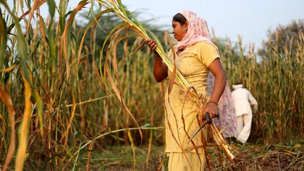 Cultivos en la India
