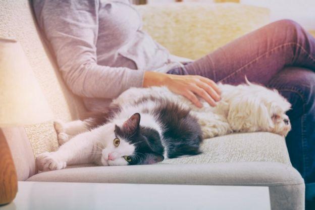 Una mujer acariciando a un gato y a un perro, sentados en un sofá
