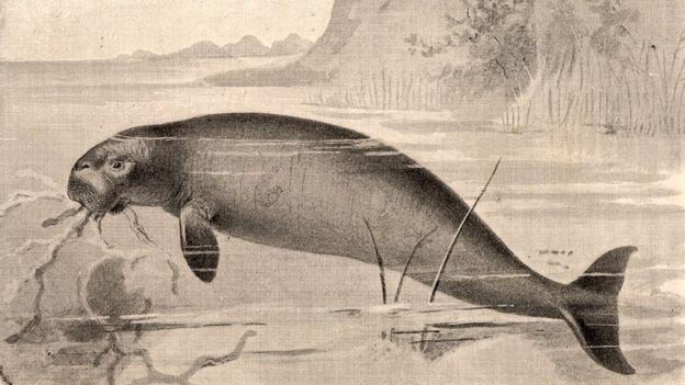 Retrato em preto e branco de dugongo-de-Steller dentro d'água