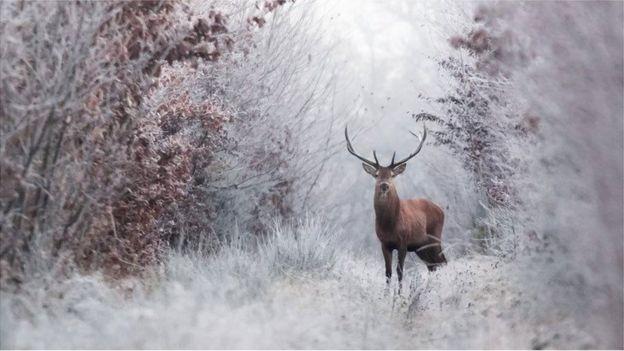 karda bir geyik