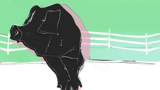 Gene-edited farm animals are on their way - BBC News