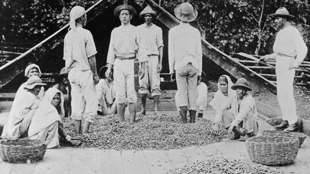 Workers processing cocoa