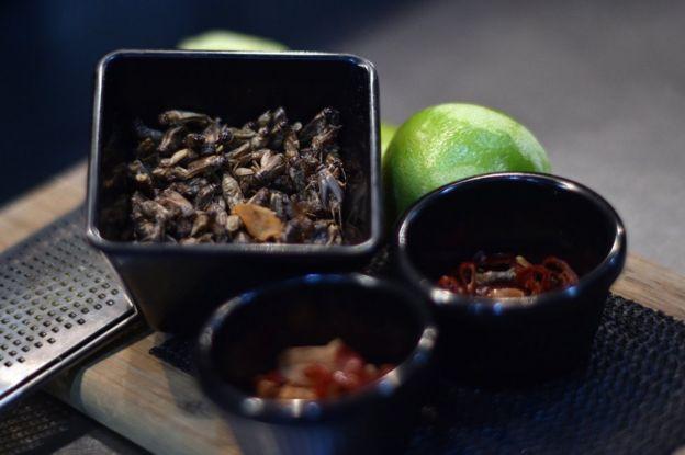 Hamam böceği dolu bir tabak