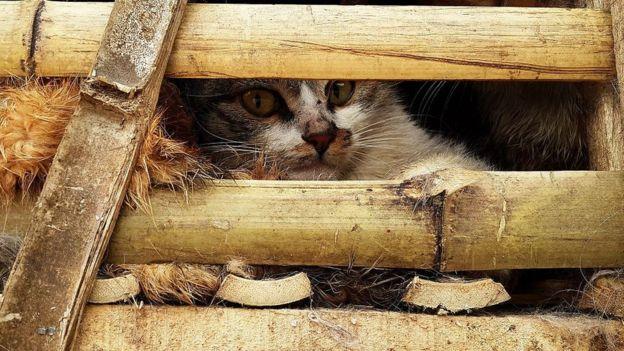 Algunos vietnamitas también comen gato, aunque en menor cantidad que el perro. Foto: Getty Images
