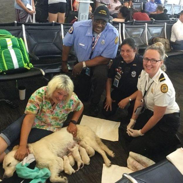 A cadela, os filhotes, a dona, e o time de bombeiros do aeroporto