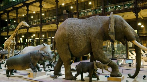 Representação de diversos animais, como elefante e girafa, em formação de fila exposta no Museu de História Natural de Paris