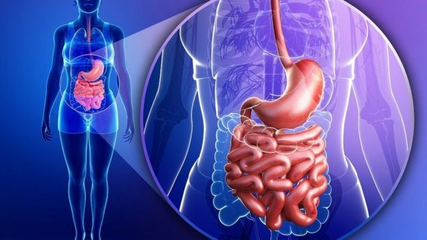 Illustration of human body showing the stomach and intestines