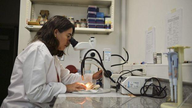 Una médica mira a través de un microscoio.