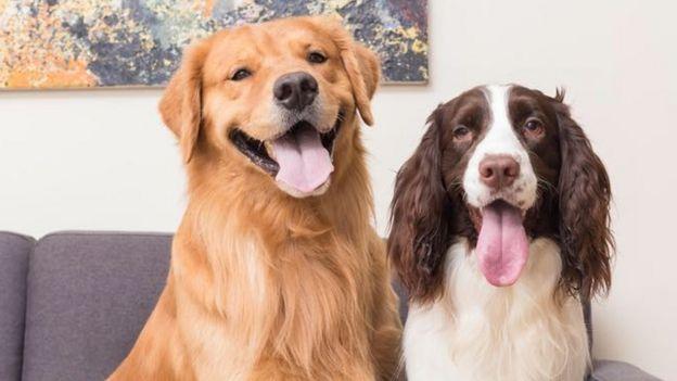Miguel y Matías, perros del youtuber Alejandro Quiceno