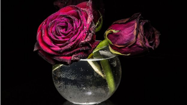 Rosas en florero de vidrio con agua.