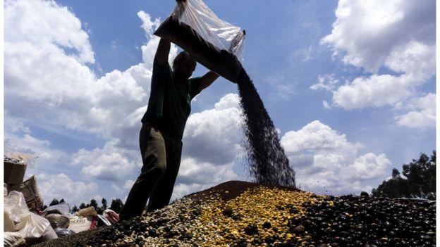 """Imagem mostra """"montanha"""" formada por mistura de sementes"""