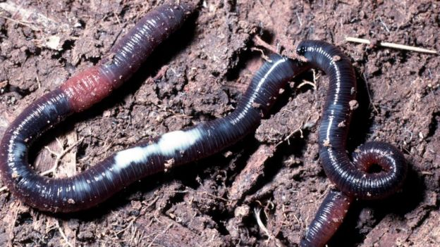 как живут червяки