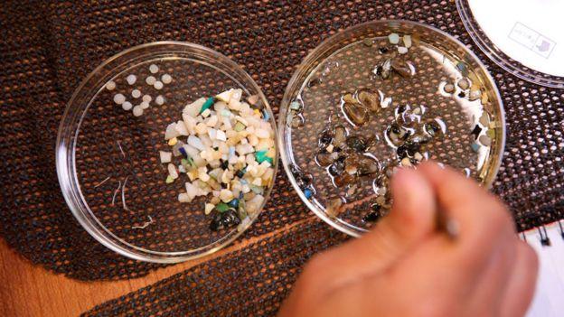 Muestras de microplásticos encontrados en el océano