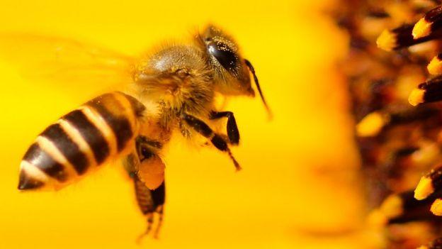 Картинки по запросу бджоли