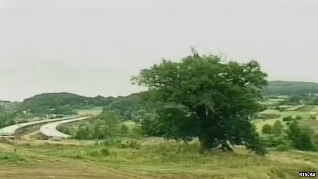 A view of the oak tree with the road in the background