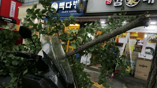 A tree is toppled by Typhoon Lingling in Seoul, South Korea, 7 September 2019