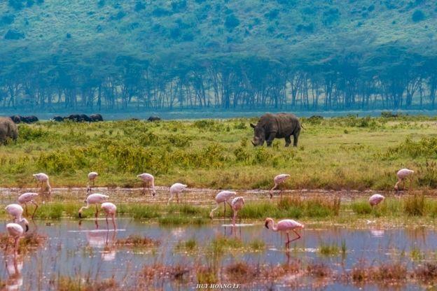 Hồng hạc và tê giác ở hồ Naivasha, Kenya