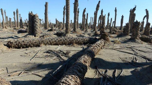 خشکسالیها باعث کاهش فضاهای سبز و نابودی تدریجی درختان شده