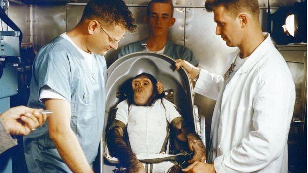 Macaco em cápsula antes de ser lançado ao espaço
