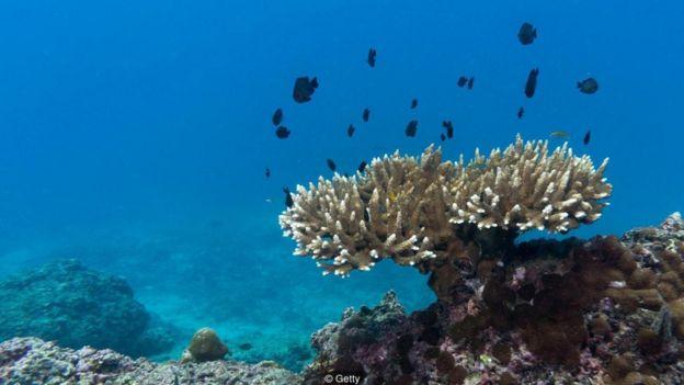 Coral no fundo do mar