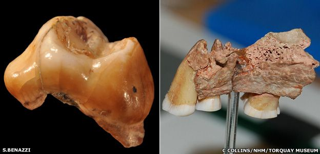 Teeth and jaw are from 'earliest Europeans'